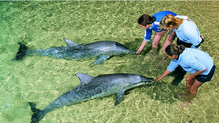 Dolphin Feeding at Tangalooma Island Resort
