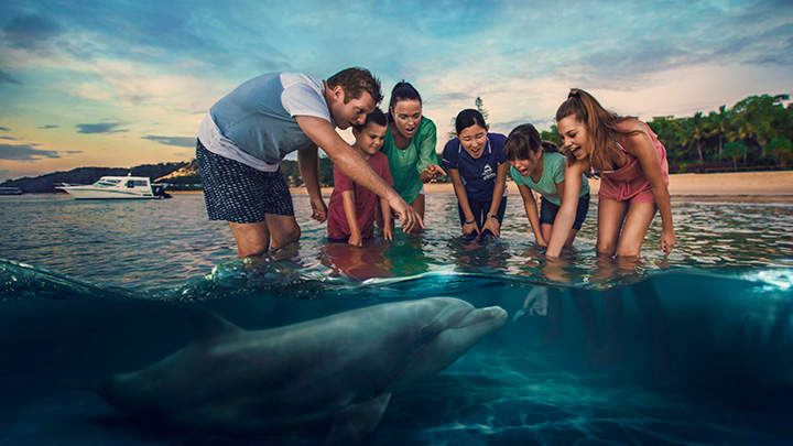 Group feed wild dolphins at Tangalooma